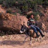 Donkey Transport  - Tangier 1985