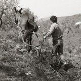 Mule plough - Cómpeta - Spain 1987