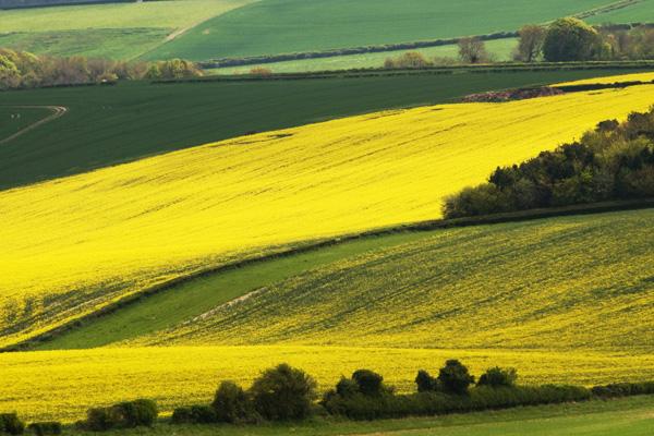Keysley Down Wiltshire