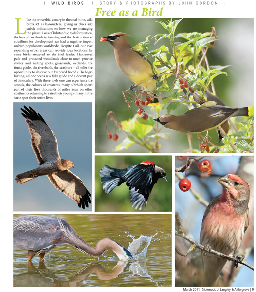 Feature on birds