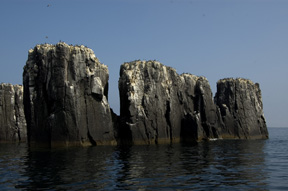 The Pinnacles, The Farne Islands