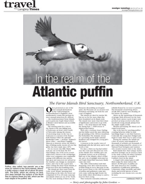 Atlantic Puffins feature