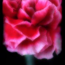 Bloom 7