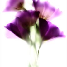 Colour Flora 5