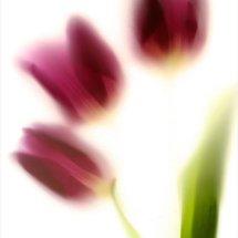 Colour flora 3