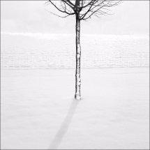 Snowscene 5