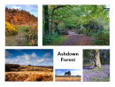Ashdown Forest Glimpses Greetings Card
