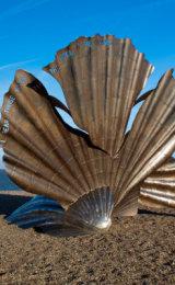 Britten's OysterShell