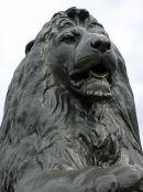 Landseer Lion