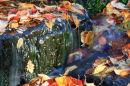 Autumn Tumbles