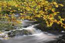 Autumn colour, New Mills