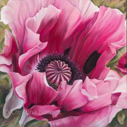 Bursting Poppy