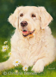 Daisy, Golden Retriever