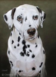 Hector, Dalmation