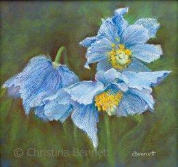 Himalayan Blue Poppies I