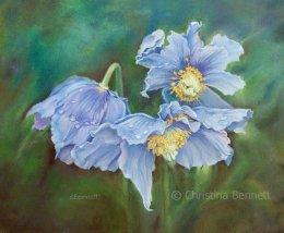 Himalayan Blue Poppies II
