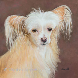 Karina, Chinese Crested Powder Puff