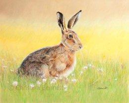 On Alert, Hare in Summer Meadow
