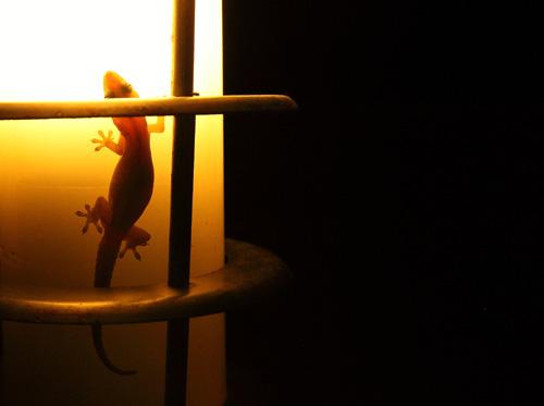 lizard on lamp