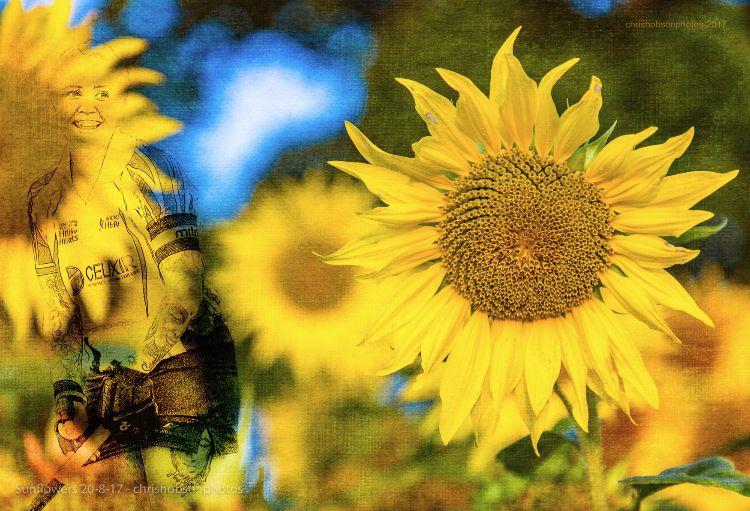sunflowers20-8-17-223-Edit