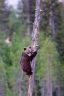 Cub climbing 2