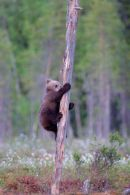 spring cub climbing