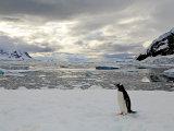Gentou Penguin 1