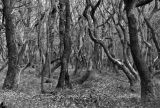Twisted Trees