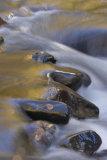Glen Moss Stream