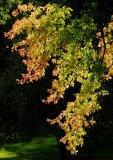 Lit Leaves