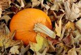 Pumpkins in Leaves