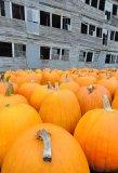 Pumpkin with Attitude