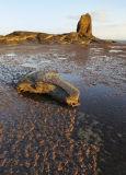 Seaweed & Rocks