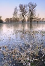 A Winter's Dawn