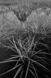 Grass and Kirkjufell Reflection