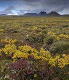 Icelandic Autumn 3