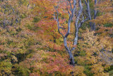 Fall Forest Detail