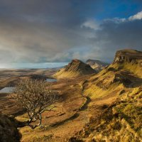 The Quiraing tree