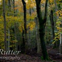 autumn leaves detail