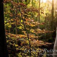 backlit autumn tree