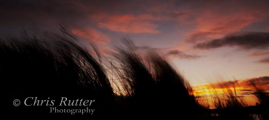 grasses sunrise 1