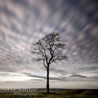 lone tree sky