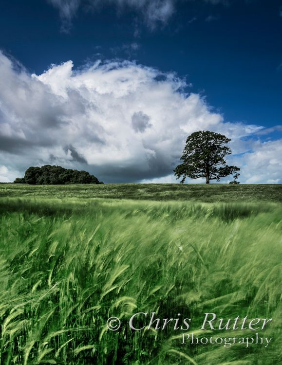 tree, field, clouds