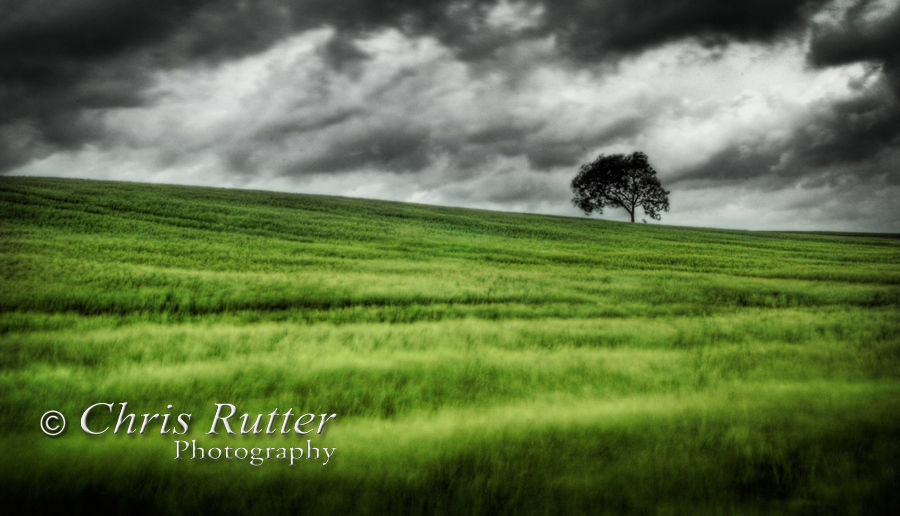 tree, field, storm