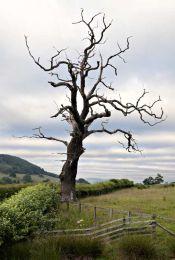 Dead tree010