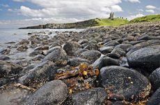 Dunstanburgh castle0005