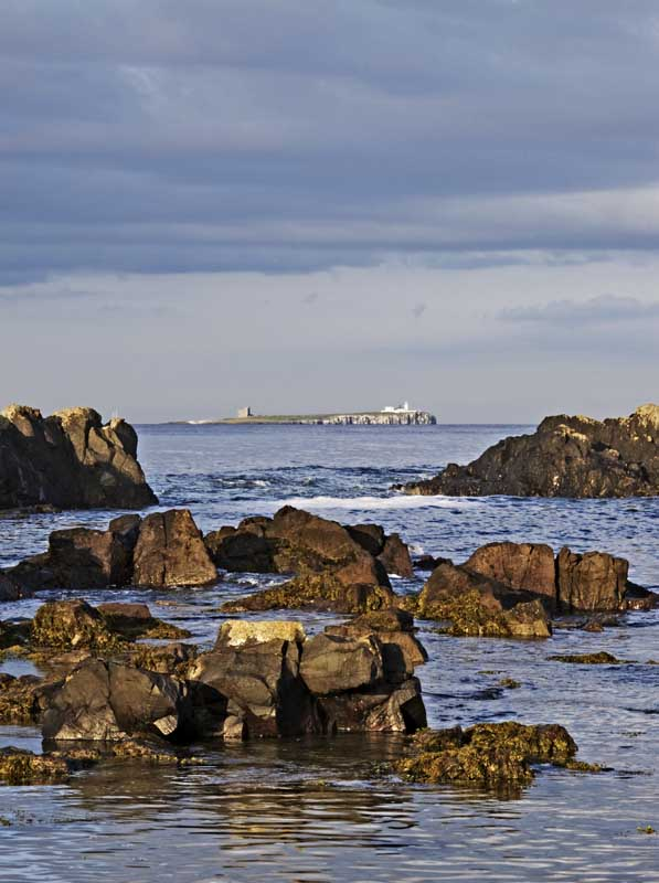 Farne islands0029