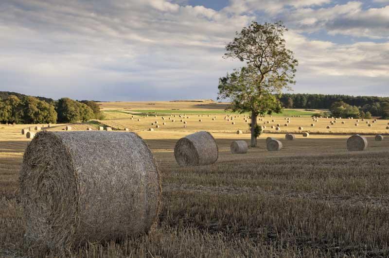 Harvest evening0027