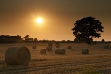 Harvest sunset0059