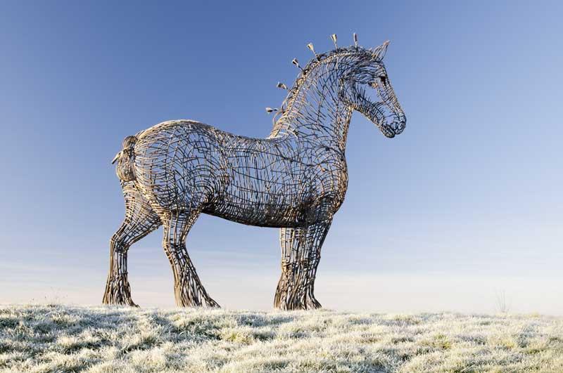 Heavy horse0016
